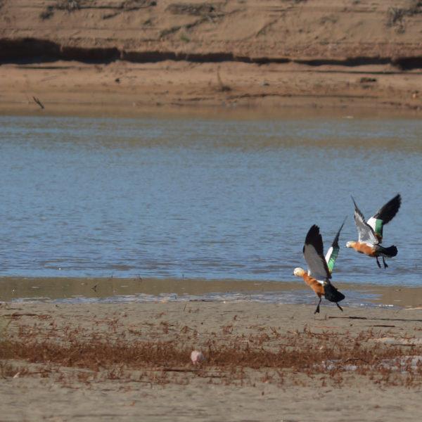 Souss Massa Park Trip From Agadir