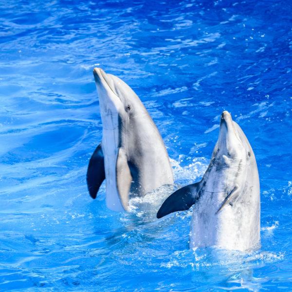 Agadir Dolphin Show