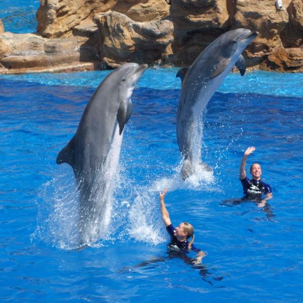 Agadir Dolphin