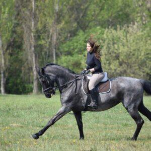 Agadir Horse Ride