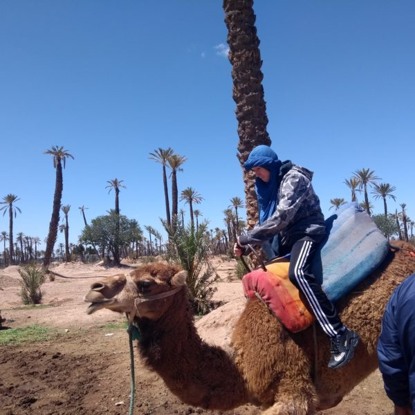 Marrakech Camel Ride
