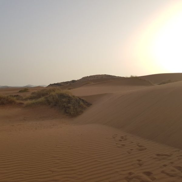 1 Day Agadir City Tour and Desert Experience With Lunch