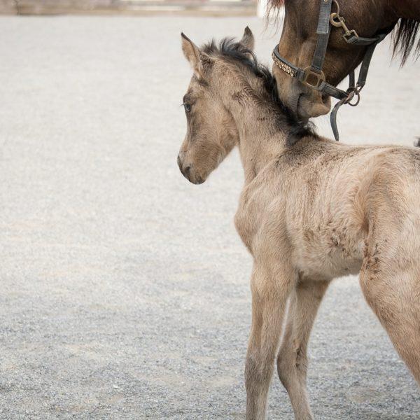 Horse Riding in Marrakech