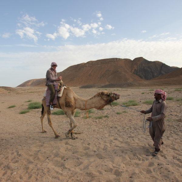 Promenade à dos de chameau à Agadir