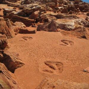 Dinosaur Footprints Trip From Agadir