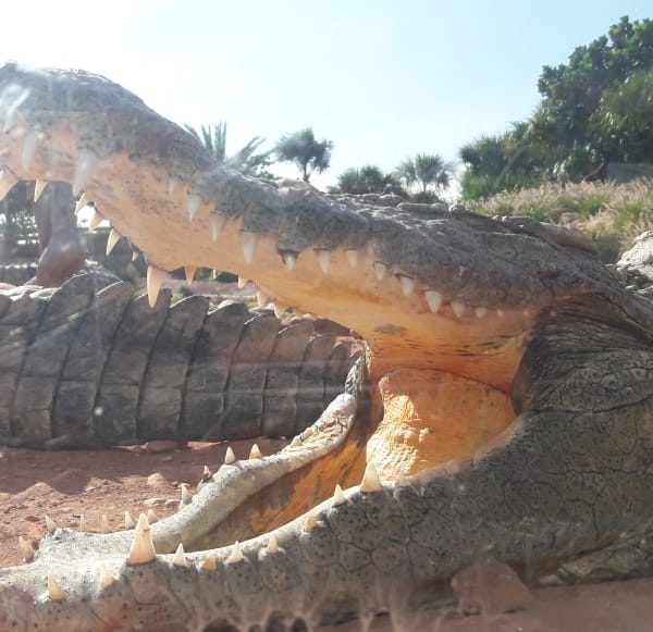 Crocoparc trip from Taghazout