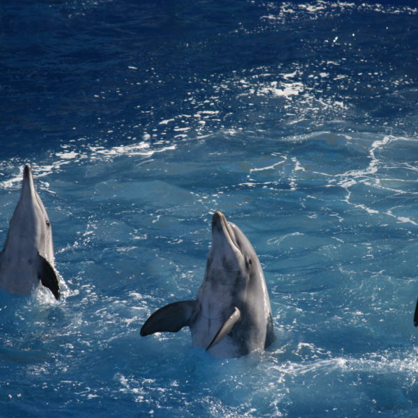 Dolphin world trip from Taghazout