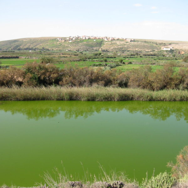 Souss Massa Park Trip From Taghazout