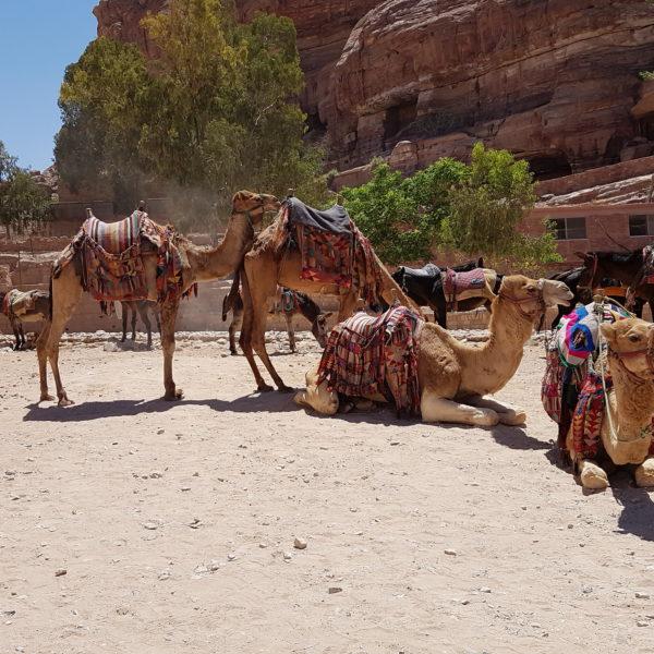 Tours From Agadir